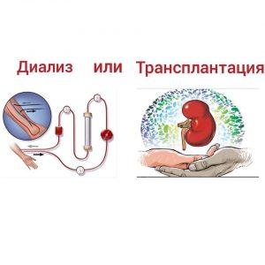 Трансплантация или диализ? TRANSPLANTIA